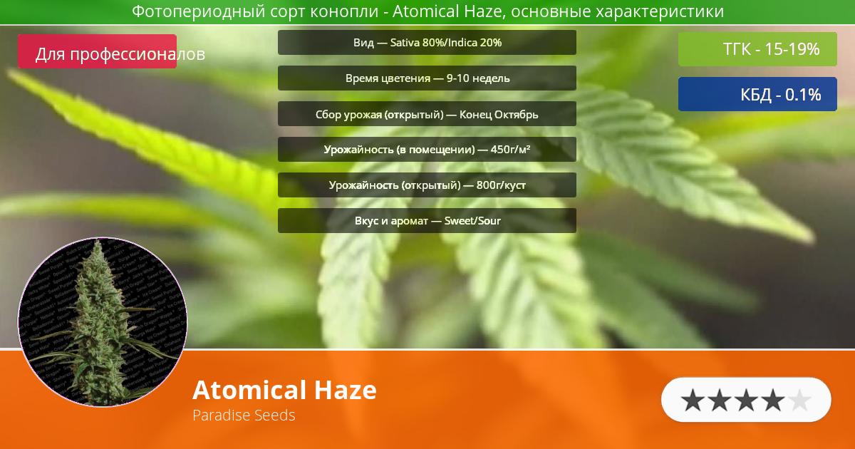 Инфограмма сорта марихуаны Atomical Haze