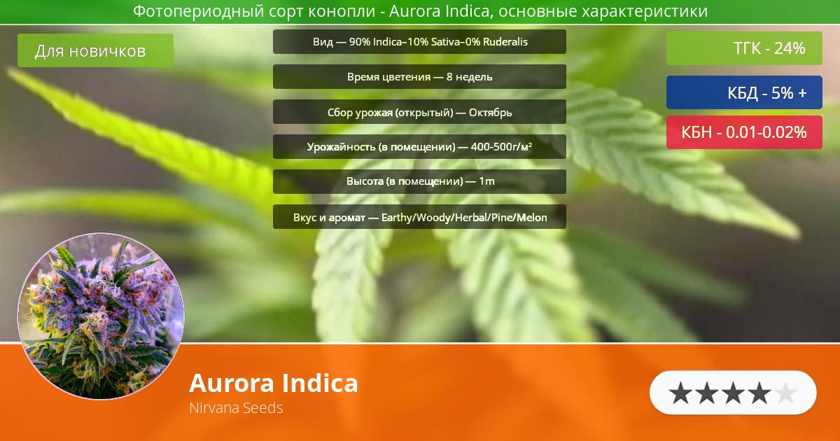 Инфограмма сорта марихуаны Aurora Indica
