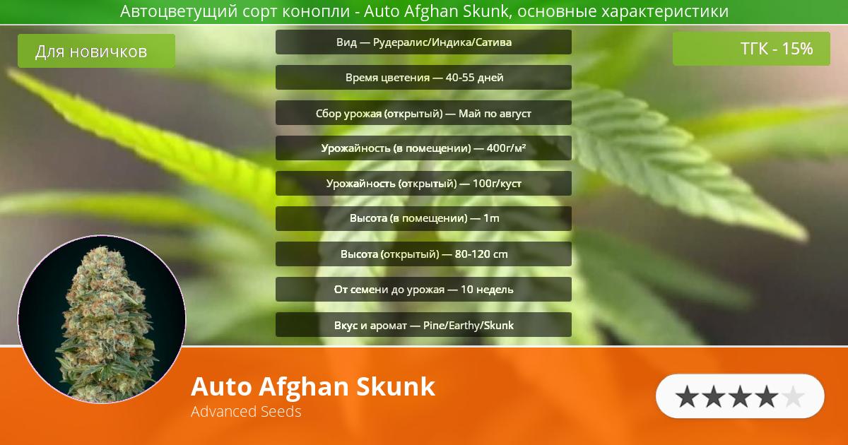 Инфограмма сорта марихуаны Auto Afghan Skunk