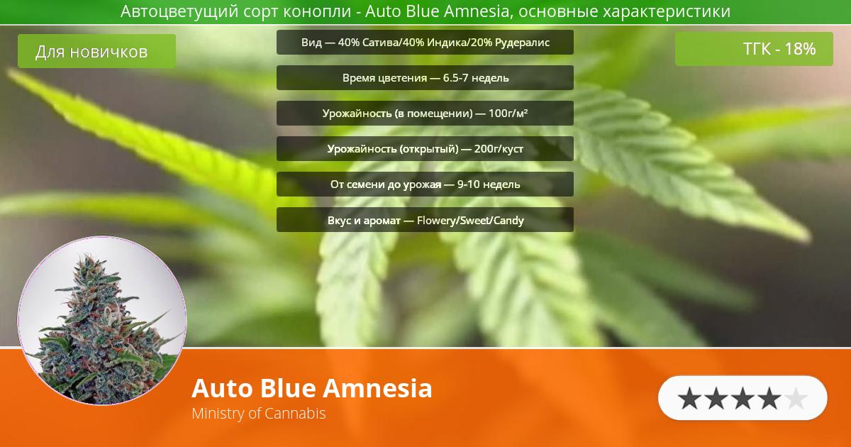Инфограмма сорта марихуаны Auto Blue Amnesia