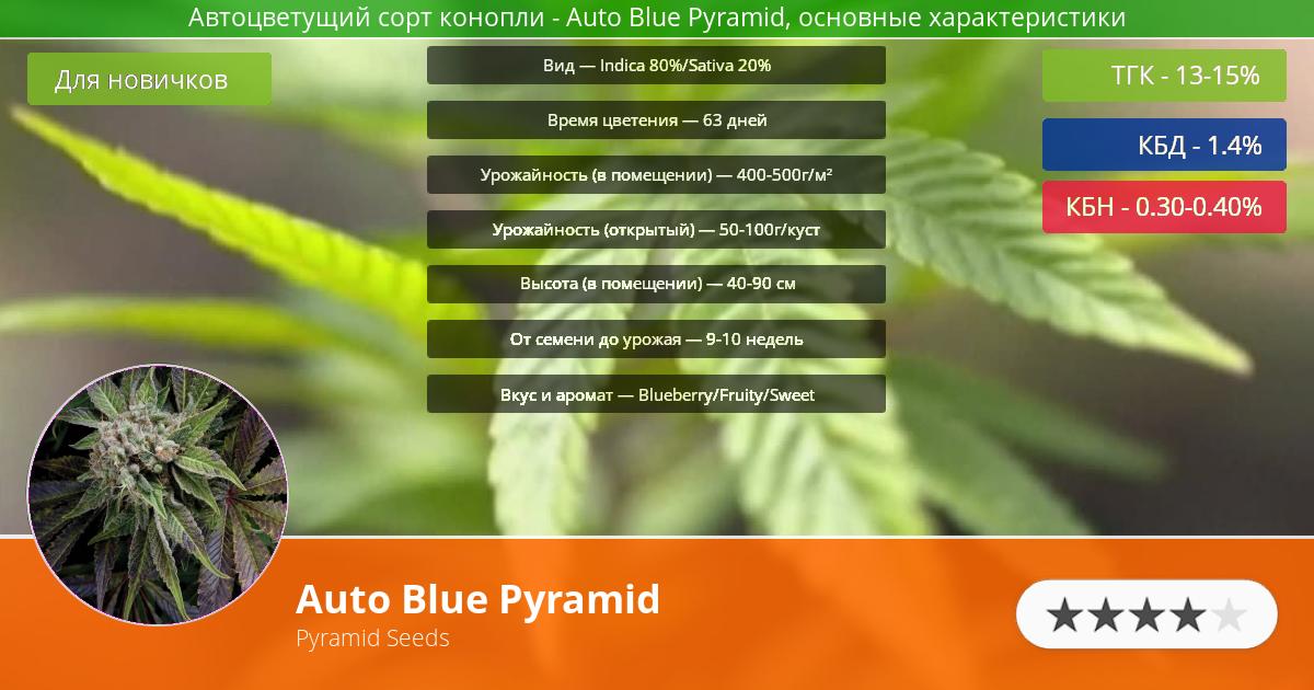 Инфограмма сорта марихуаны Auto Blue Pyramid