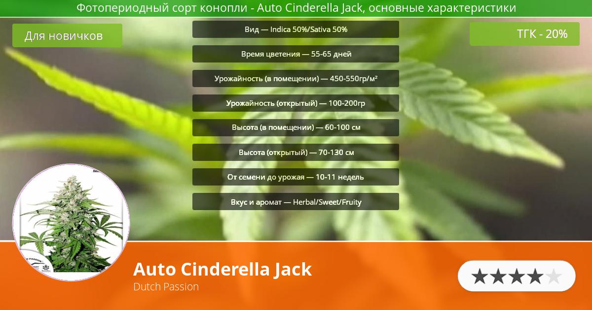 Инфограмма сорта марихуаны Auto Cinderella Jack