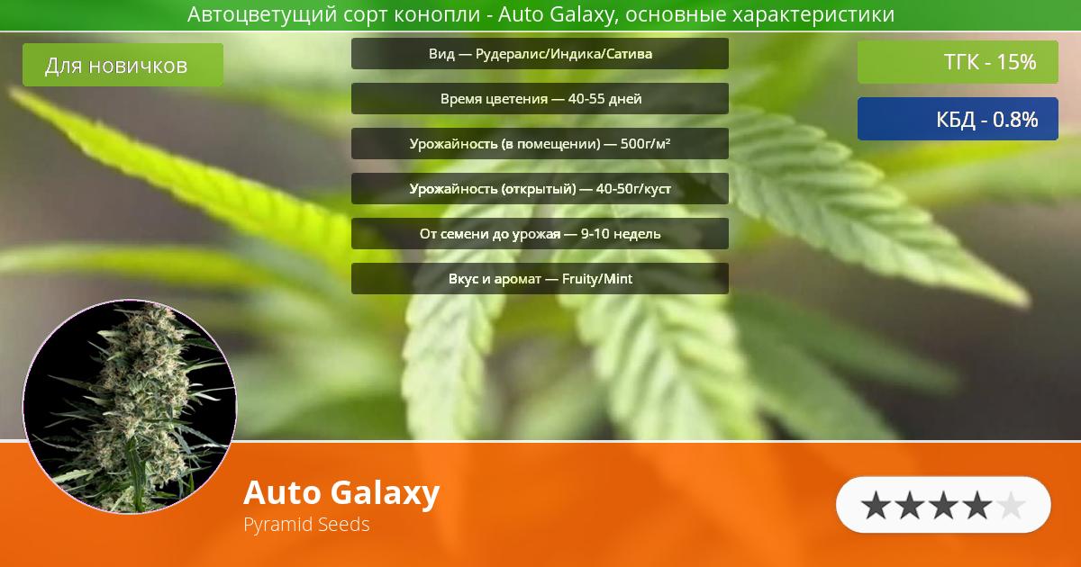 Инфограмма сорта марихуаны Auto Galaxy
