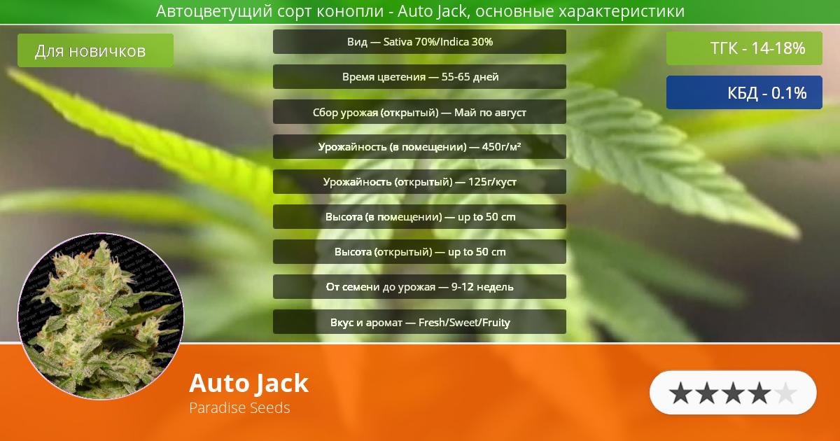 Инфограмма сорта марихуаны Auto Jack