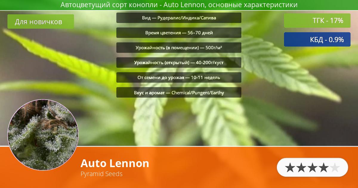Инфограмма сорта марихуаны Auto Lennon