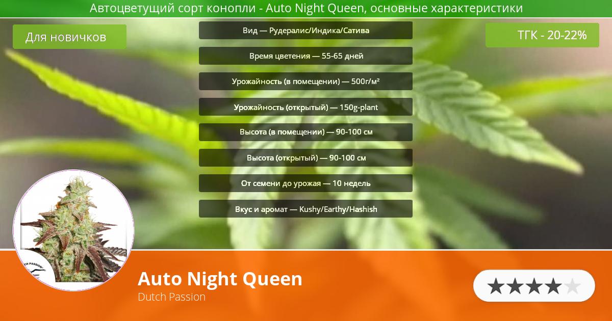 Инфограмма сорта марихуаны Auto Night Queen