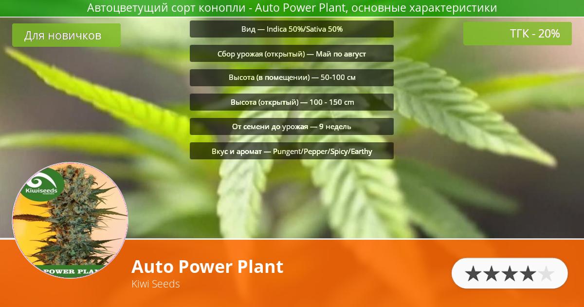Инфограмма сорта марихуаны Auto Power Plant