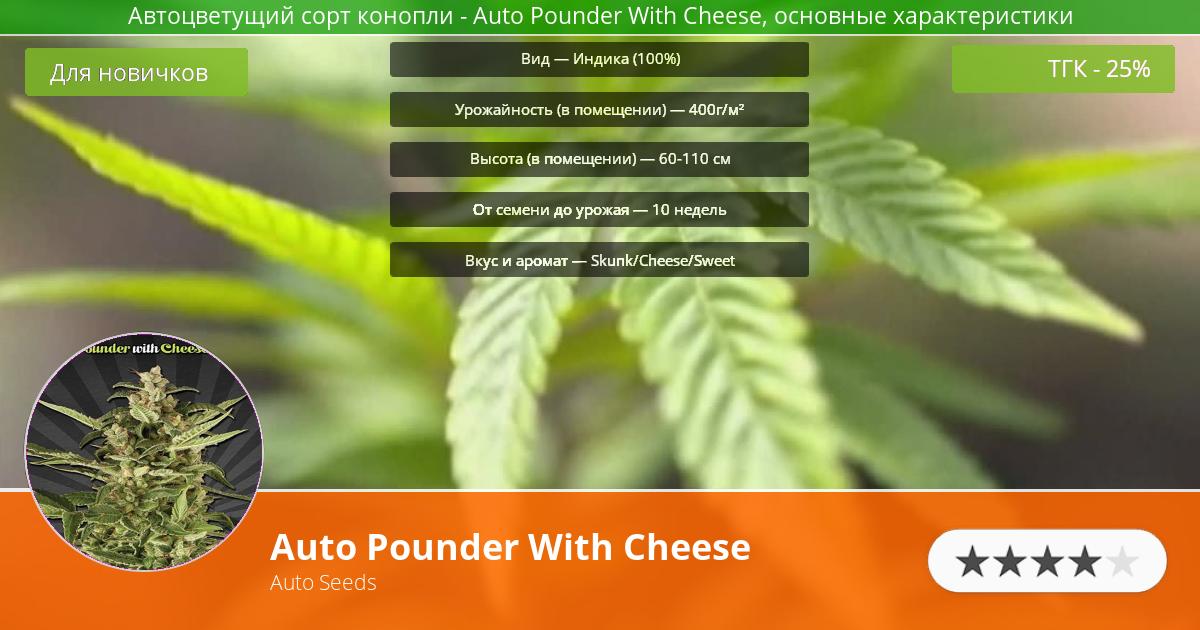 Инфограмма сорта марихуаны Auto Pounder With Cheese