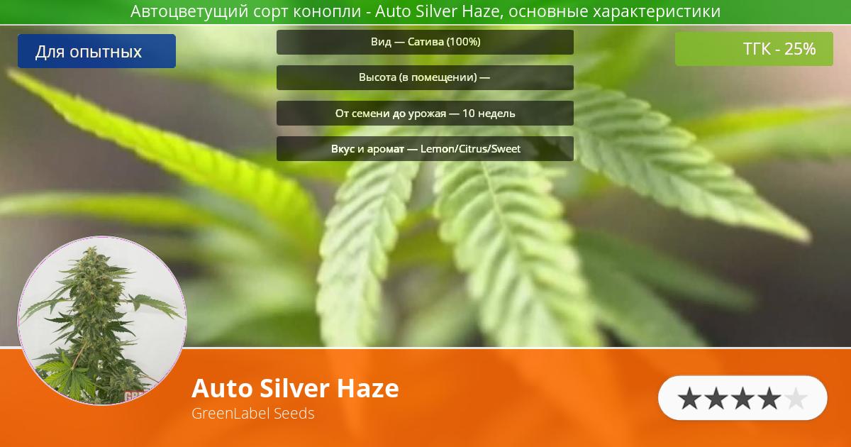 Инфограмма сорта Auto Silver Haze