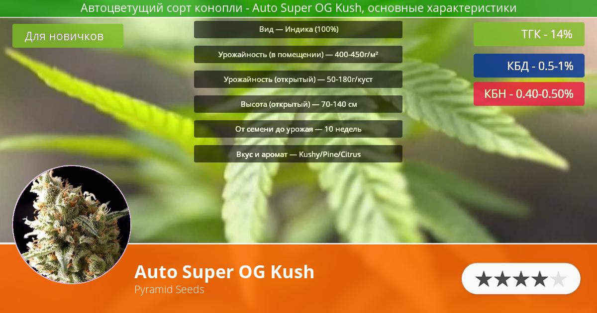 Инфограмма сорта марихуаны Auto Super OG Kush