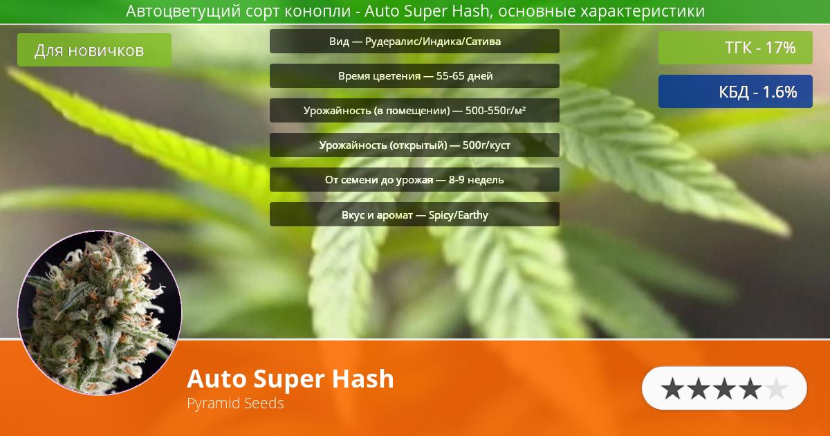 Инфограмма сорта марихуаны Auto Super Hash