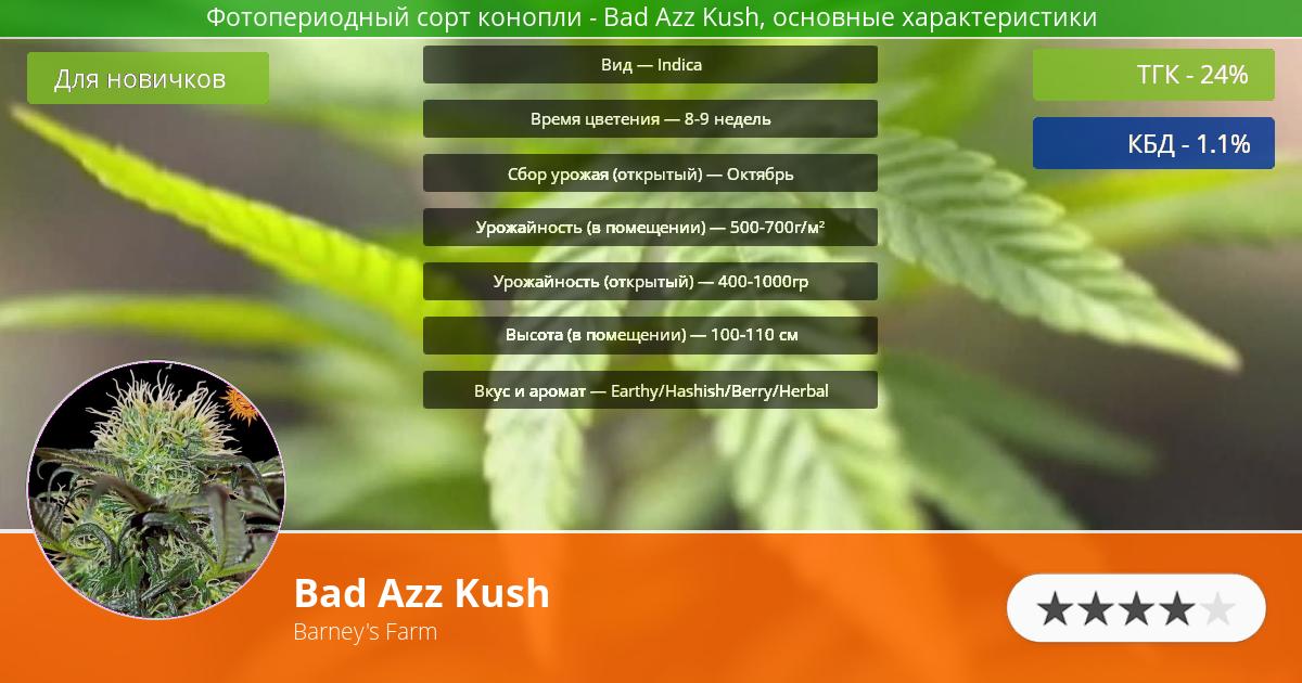 Инфограмма сорта марихуаны Bad Azz Kush