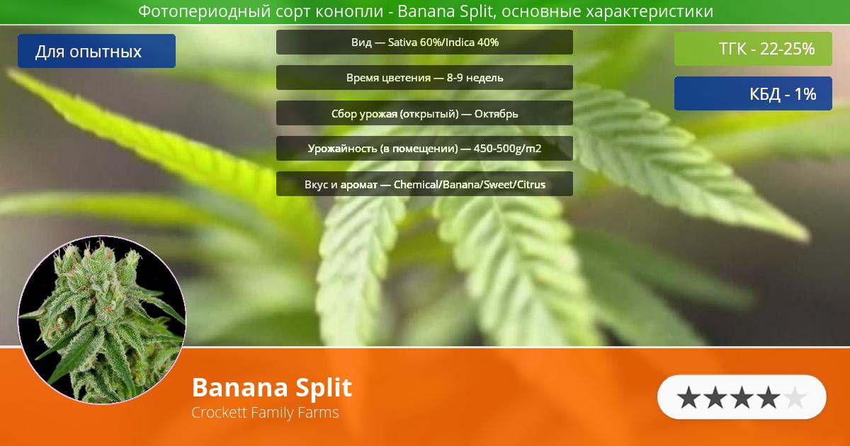 Инфограмма сорта марихуаны Banana Split