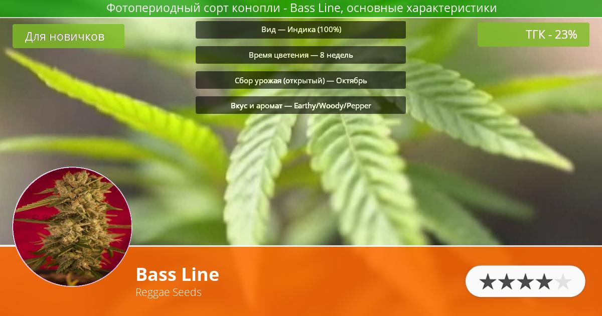 Инфограмма сорта марихуаны Bass Line