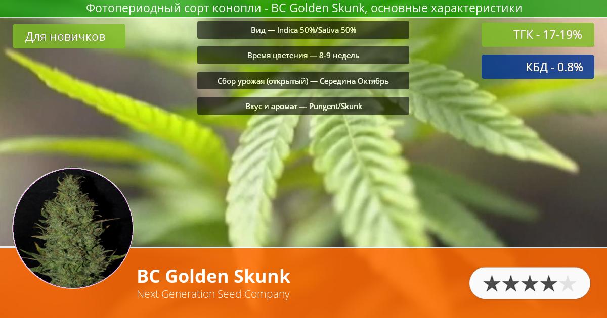Инфограмма сорта марихуаны BC Golden Skunk