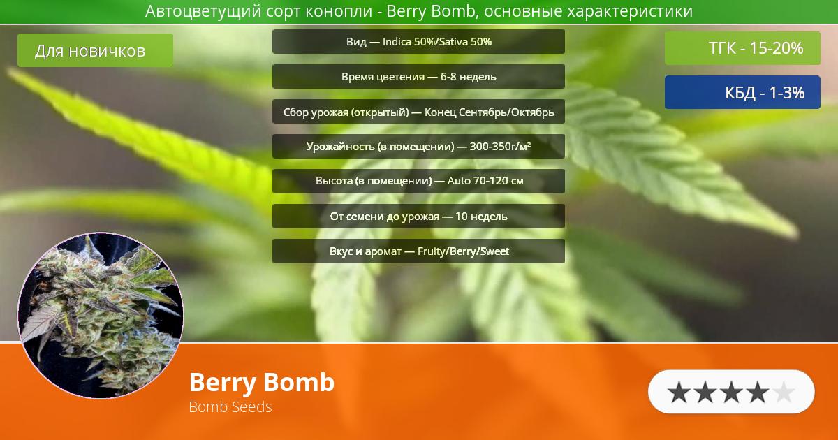 Инфограмма сорта марихуаны Berry Bomb