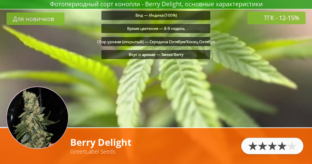 Инфограмма сорта марихуаны Berry Delight