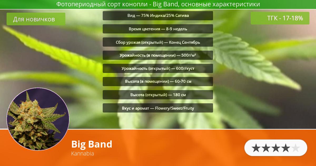 Инфограмма сорта марихуаны Big Band