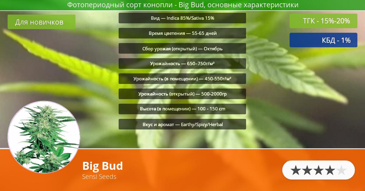 Инфограмма сорта марихуаны Big Bud