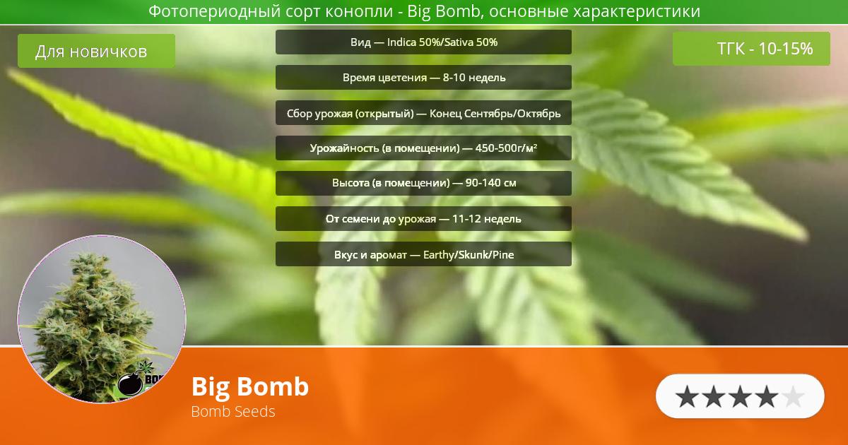 Инфограмма сорта марихуаны Big Bomb