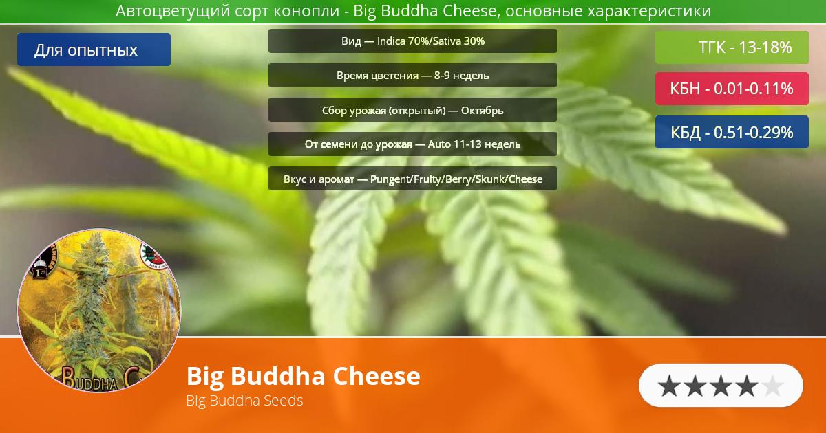 Инфограмма сорта марихуаны Big Buddha Cheese