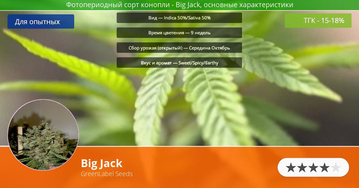 Инфограмма сорта марихуаны Big Jack