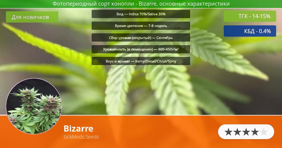 Инфограмма сорта марихуаны Bizarre