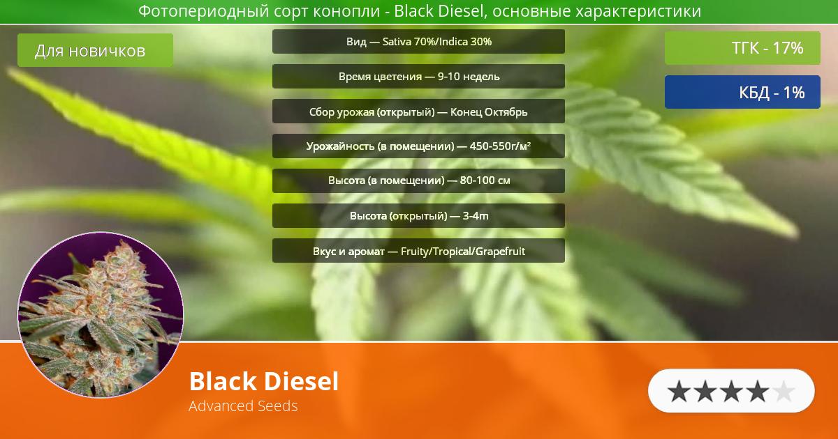 Инфограмма сорта марихуаны Black Diesel