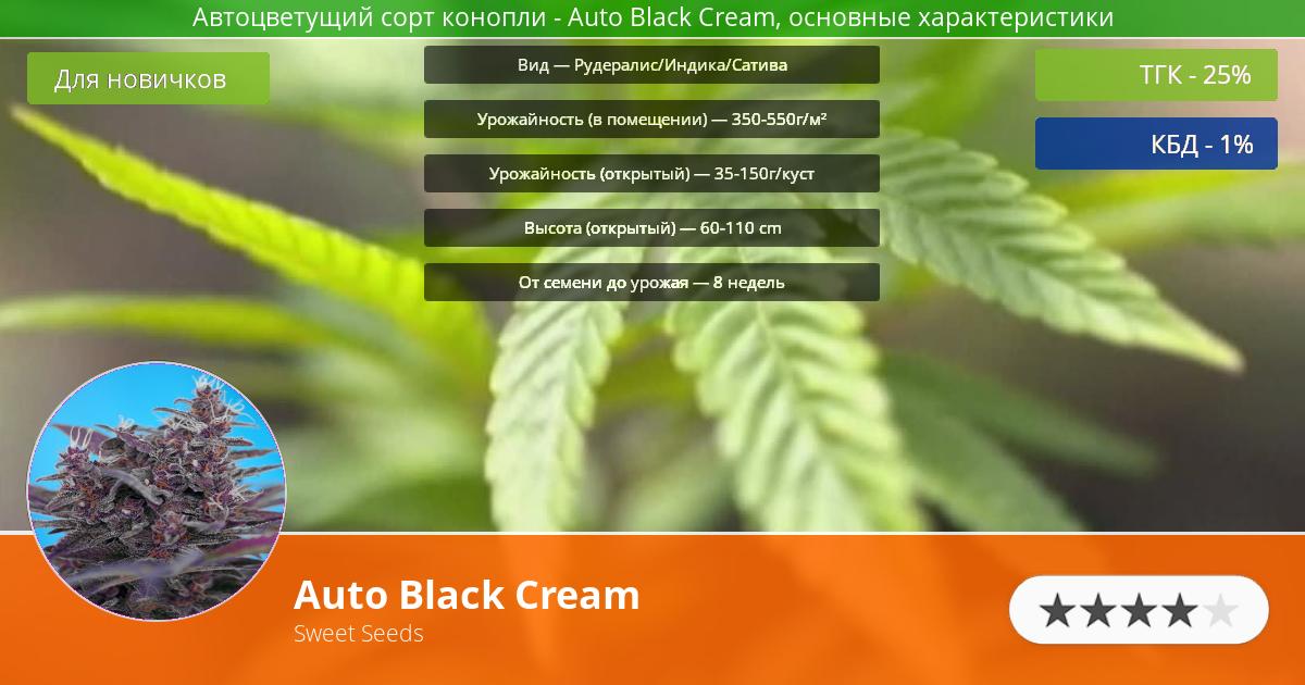 Инфограмма сорта марихуаны Auto Black Cream