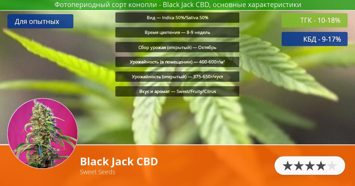 Инфограмма сорта марихуаны Black Jack CBD