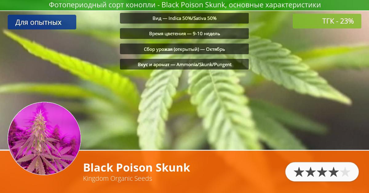Инфограмма сорта марихуаны Black Poison Skunk