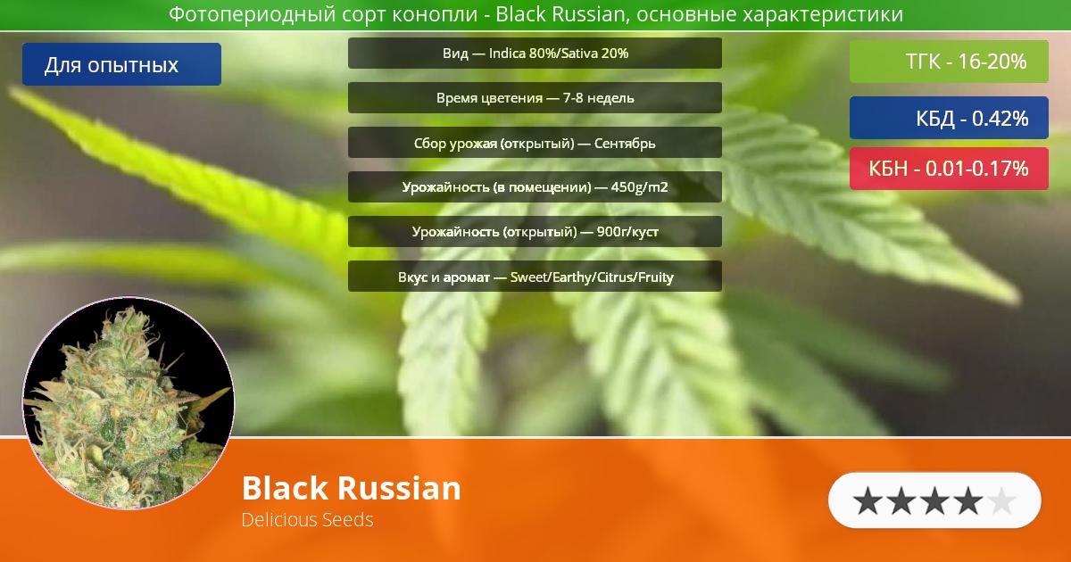 Инфограмма сорта марихуаны Black Russian