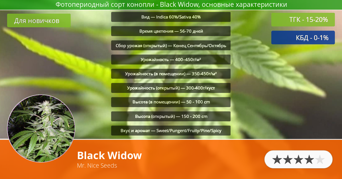 Инфограмма сорта марихуаны Black Widow