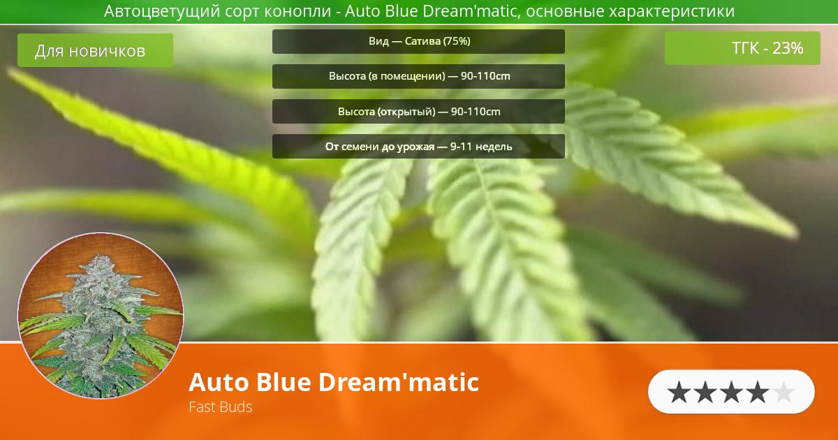 Инфограмма сорта марихуаны Auto Blue Dream'matic