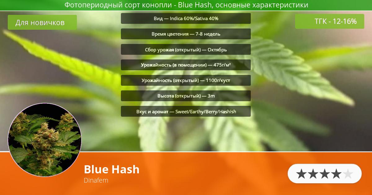 Инфограмма сорта марихуаны Blue Hash