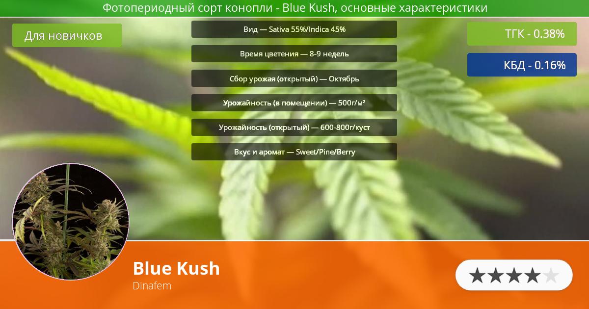 Инфограмма сорта марихуаны Blue Kush