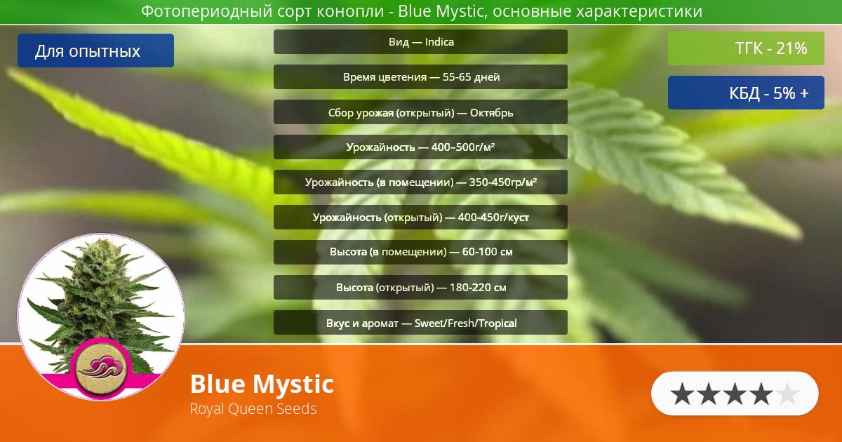 Инфограмма сорта марихуаны Blue Mystic