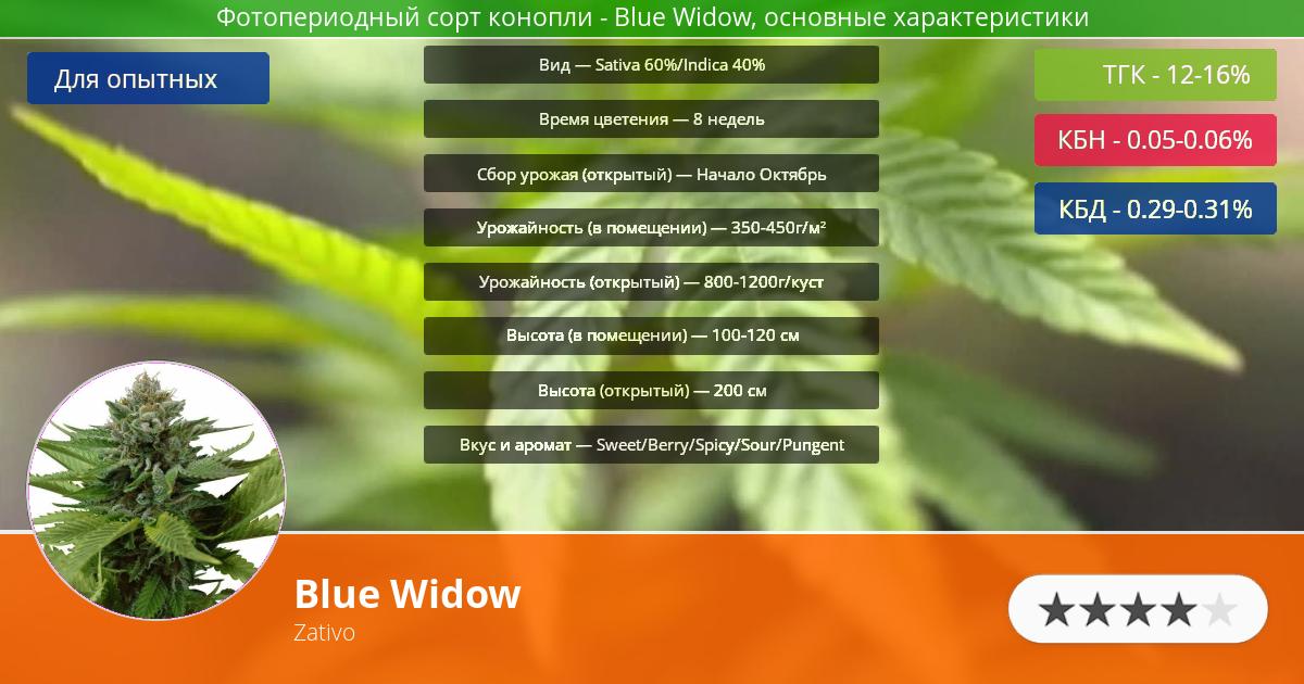 Инфограмма сорта марихуаны Blue Widow