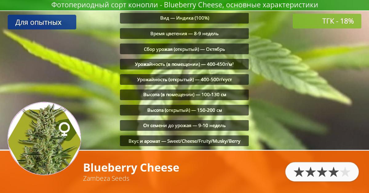 Инфограмма сорта марихуаны Blueberry Cheese