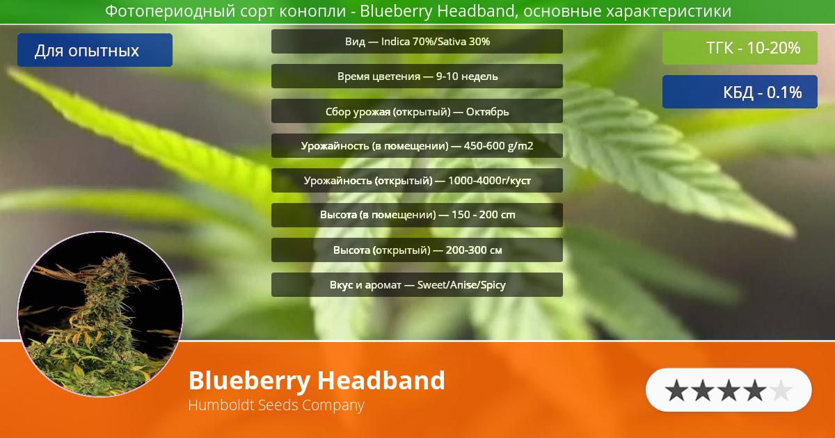 Инфограмма сорта марихуаны Blueberry Headband