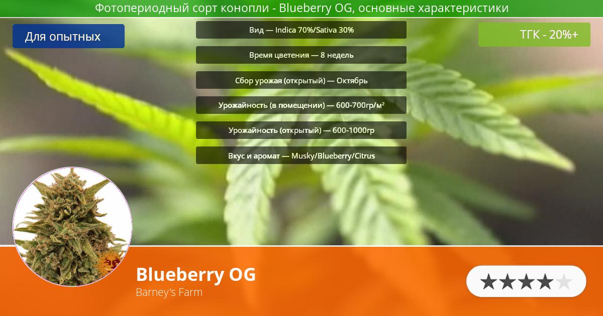 Инфограмма сорта марихуаны Blueberry OG