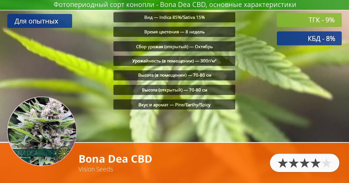 Инфограмма сорта марихуаны Bona Dea CBD