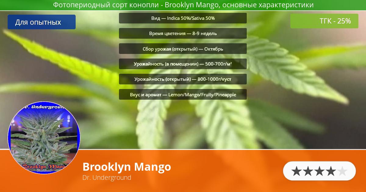 Инфограмма сорта марихуаны Brooklyn Mango
