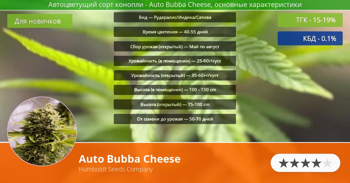 Инфограмма сорта марихуаны Auto Bubba Cheese