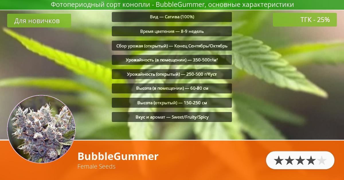 Инфограмма сорта марихуаны BubbleGummer