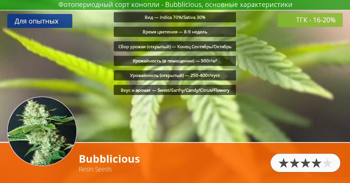 Инфограмма сорта марихуаны Bubblicious