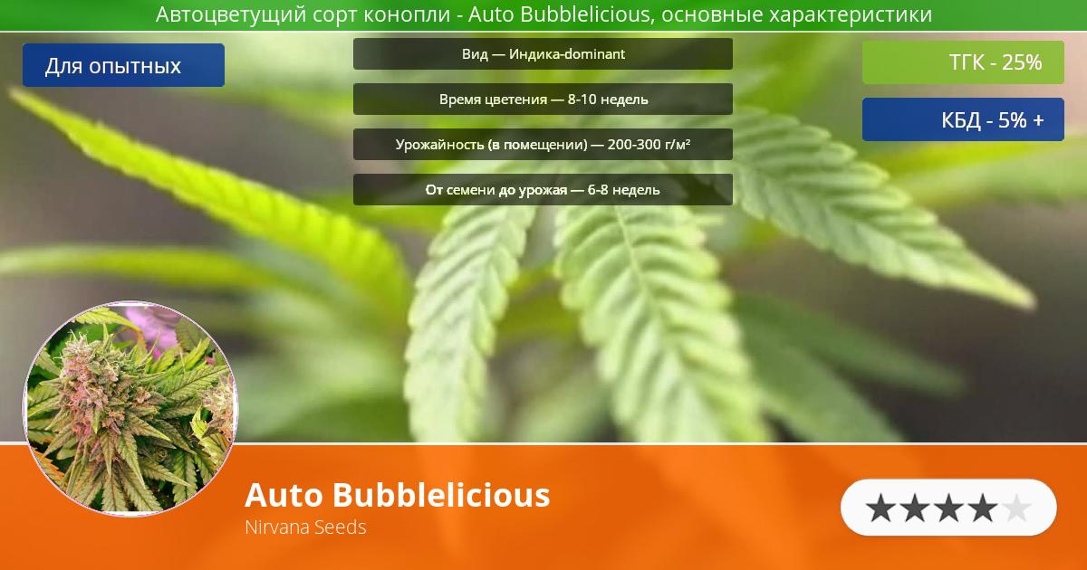 Инфограмма сорта марихуаны Auto Bubblelicious