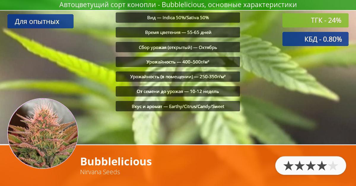 Инфограмма сорта марихуаны Bubblelicious