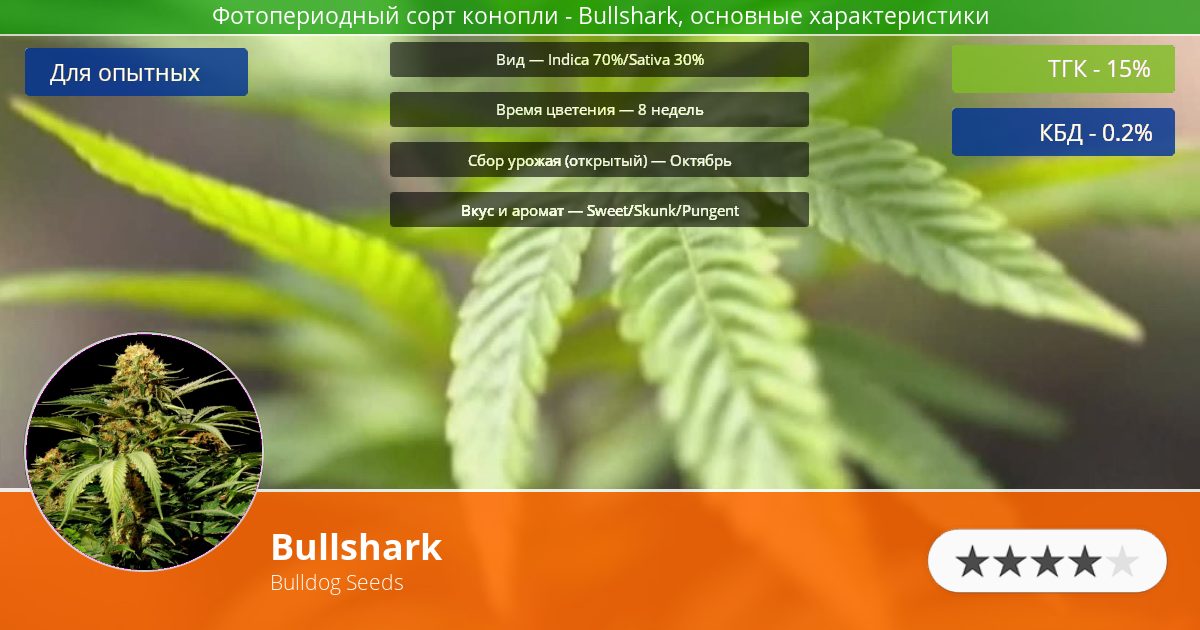 Инфограмма сорта марихуаны Bullshark