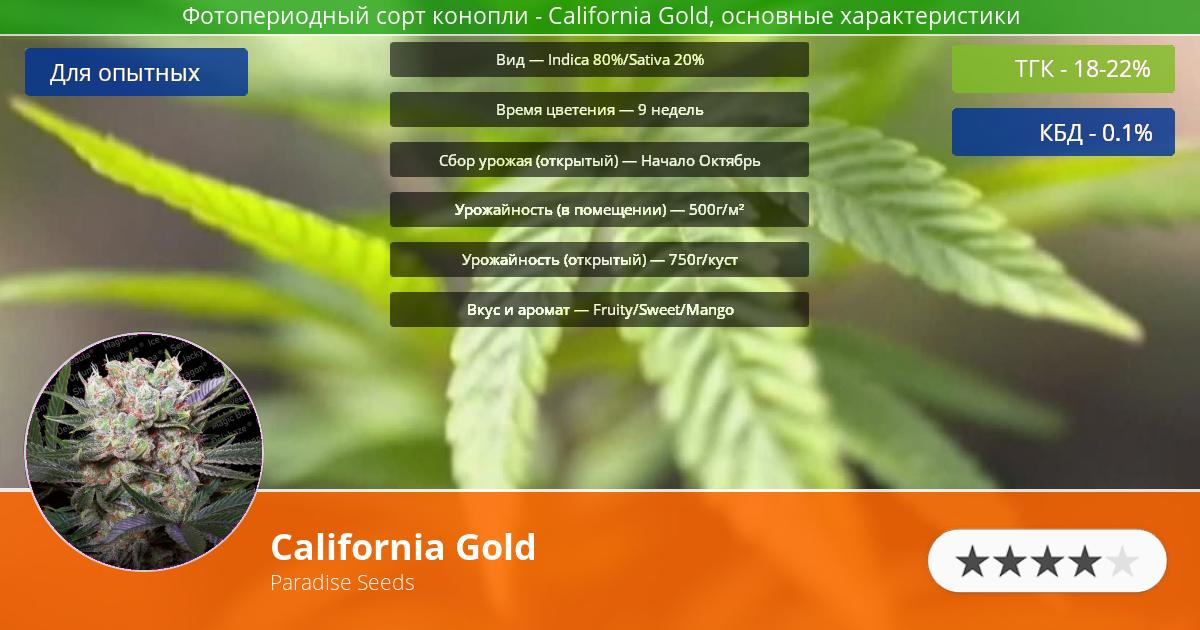Инфограмма сорта марихуаны California Gold